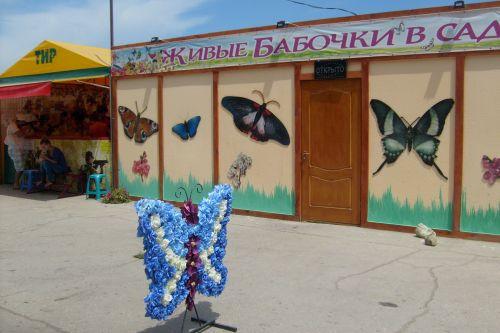 Выставка бабочек в Феодосии